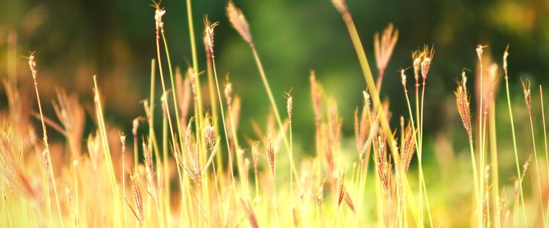 Summer Grass-2
